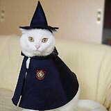 Harry Potter Hogwarts Cat: Hogwarts Cat, Cat Dresses, Cat Fashion, Potter Hogwarts, Cats Clos, Wizards Cat, Crazy Cat, Cat Samantha, Halloween Cat
