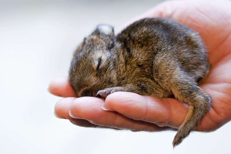 A handful of rabbit: Keeper Kristina, Hands, Baby Bunnies, Baby Animal, Baby Rabbit, Sleep, The Zoos, Rabbit Foundl, Dung Pile