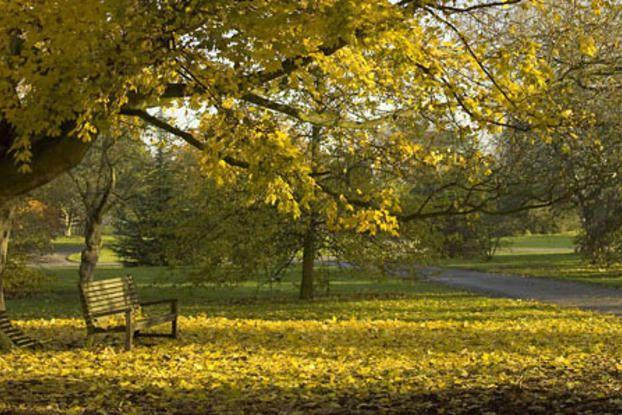 Kew's Arboretum in autumn
