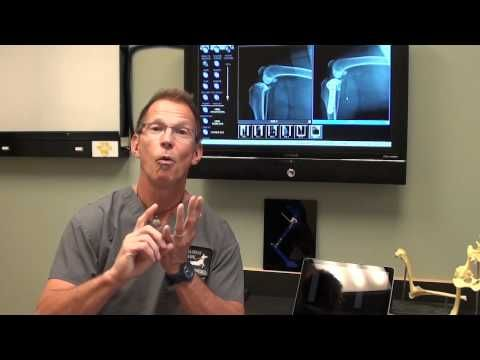 ▶ Canine ACL Tears and TPLO Surgery discussed by Dr. Bauer, DVM, DACVS - YouTube