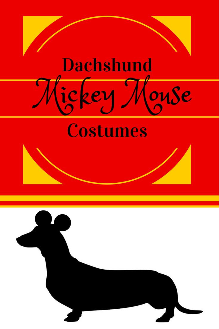 7 best Dogs Halloween Costumes images on Pinterest