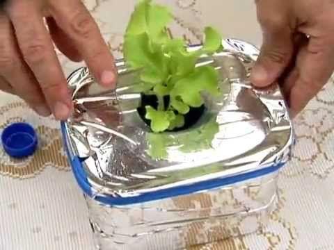 Aprenda a plantar alface em pote de sorvete - Receitas e Dicas Rápidas