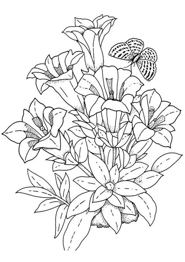78 best Flower coloring images on Pinterest Coloring books - copy free coloring pages of hibiscus flowers