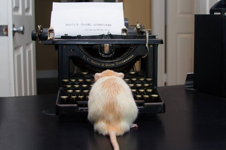 Marty Mouse writes his story.