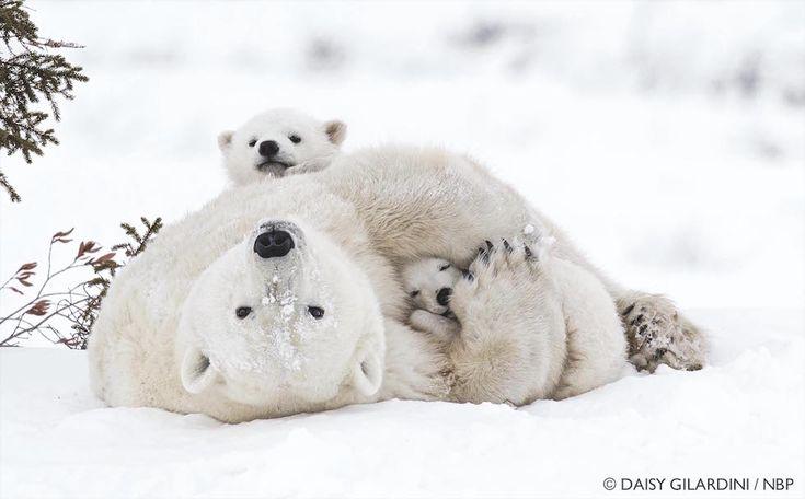 Belle foto di animali in mostra allo Smithsonian - Il Post