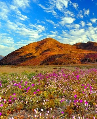 Desierto Florido,Chile