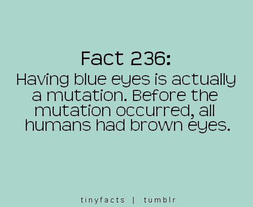 Best 25+ Blue Eye Facts Ideas On Pinterest