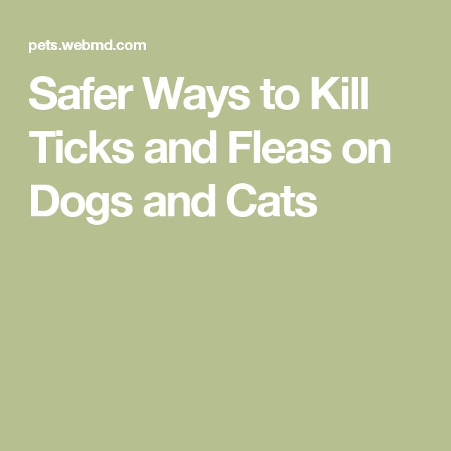 Safer Ways to Kill Ticks and Fleas on Dogs and Cats