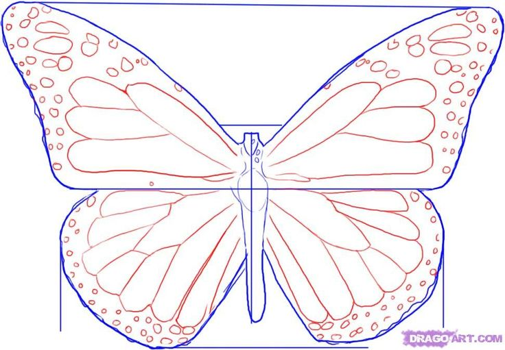 How to Draw A Monarch Butterfly