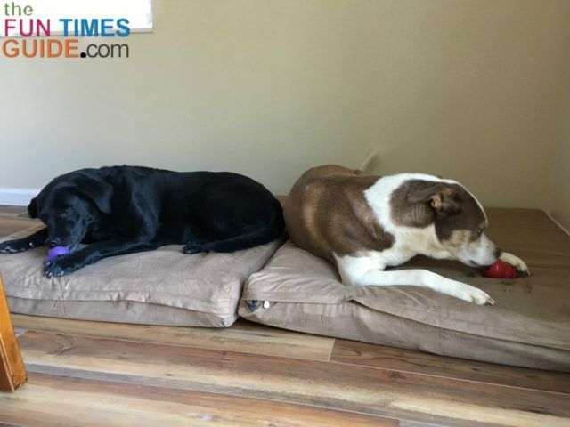 Thinking of getting an orthopedic dog bed? I made my own cheap no-sew dog beds from memory foam for half the price of buying new extra large dog beds. See how we created a separate dog mudroom area in our house (to keep the dirt and mud to a minimum inside) and how we made cheap dog beds ourselves. #CheapMemoryFoam