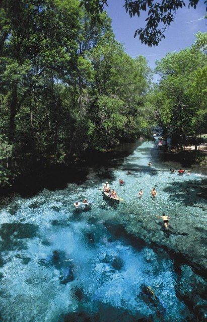 Ginnie Springs, Florida. Ginnie Springs   one of the clearest springs in Florida. The 72-degree water is perfect for river tubing, swimming, snorkeling, and scuba diving.