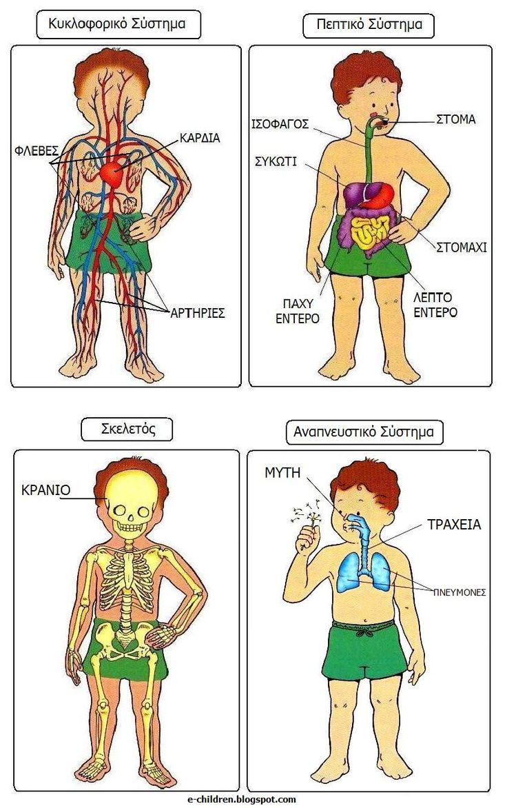 Ένας πίνακας αναφοράς για το κυκλοφορικό σύστημα, το πεπτικό σύστημα, το αναπνευστικό σύστημα και τον ανθρώπινο σκελετό.   Read more: http://e-children.blogspot.com/2012/11/blog-post.html#ixzz3NHBdQGym  Under Creative Commons License: Attribution Share Alike