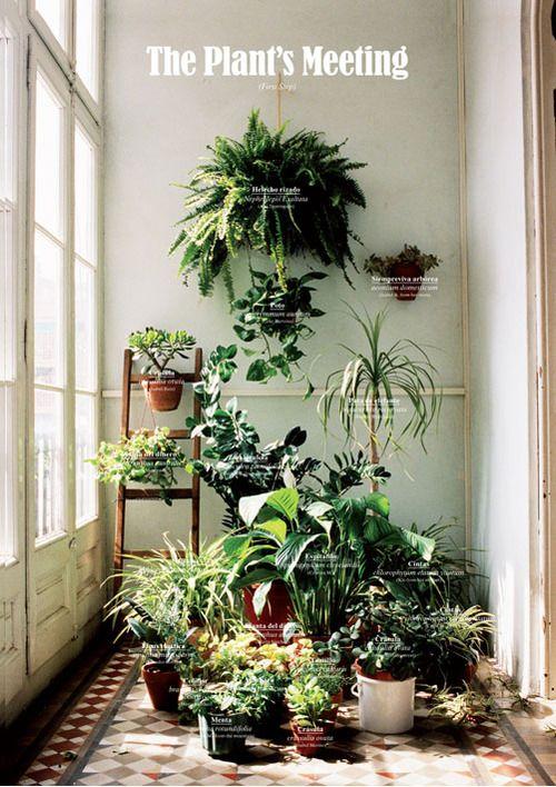 indoor plant display