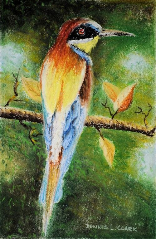 Free Pastel Lesson - How to Draw an European Bee-Eater in Pastel — Online Art Lessons