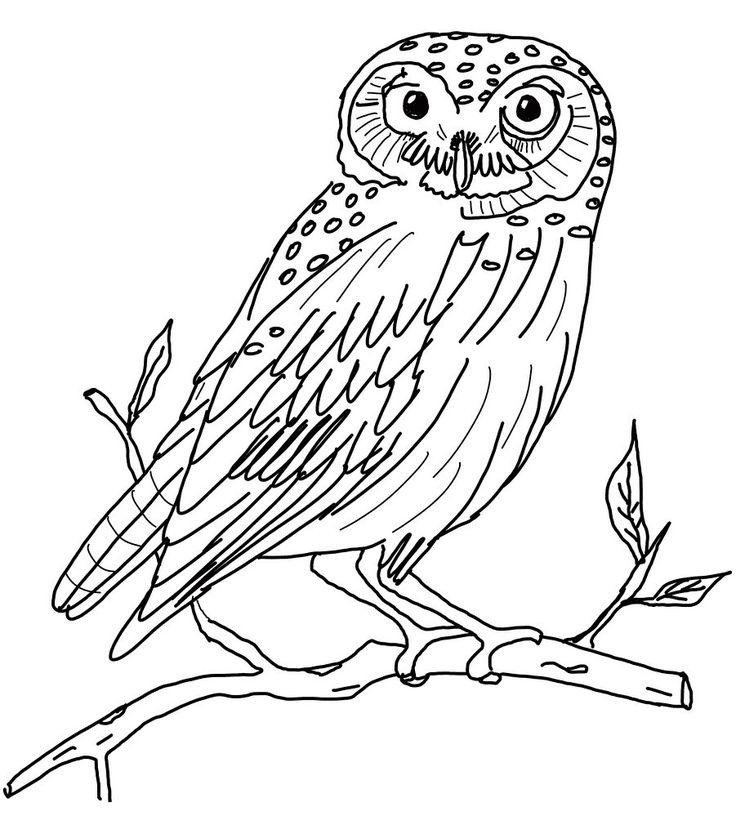 owl coloring pages printable free printable owl coloring pages printable free free owl coloring - Printable Drawing Worksheets
