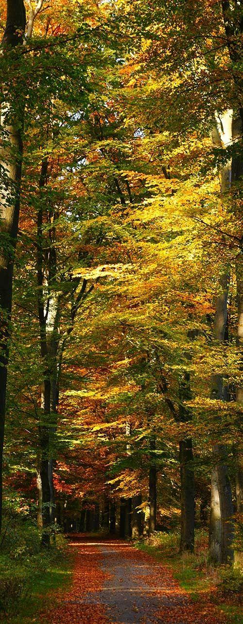 Autumn Colours Flowers Garden Love