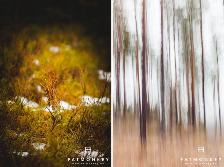 Været og sånnt...Vandring i Trollskogen - Fotograf Ann Sissel Holthe | Portrett og Bryllupsfotograf