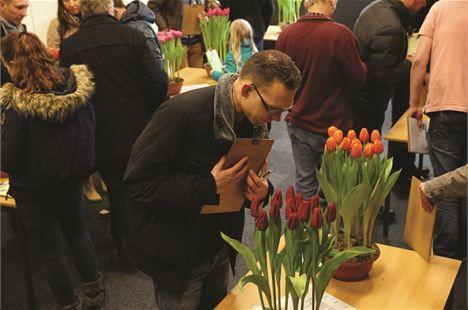 Wervershoof - Afgelopen vrijdag was de voorlaatste tulpenkeuring. Er waren wederom tien mooie potten met tulpen die gekeurd moesten worden. Een eervolle vermelding is voor John Burgman die alle pot...