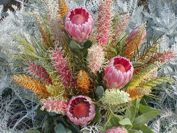Protea_Flowering-Grevillea-.jpg (959×720)