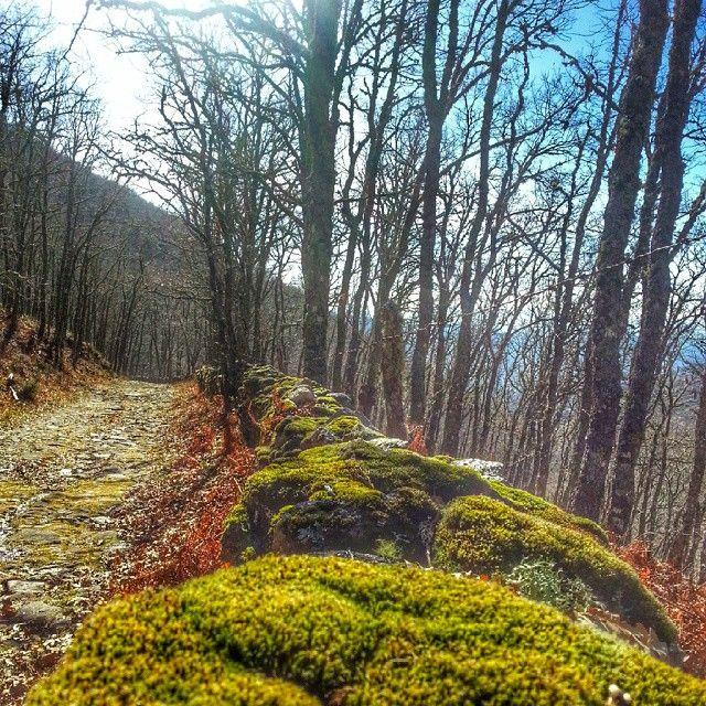 Precioso paseo por la calzada romana de #sanmartindetrevejo