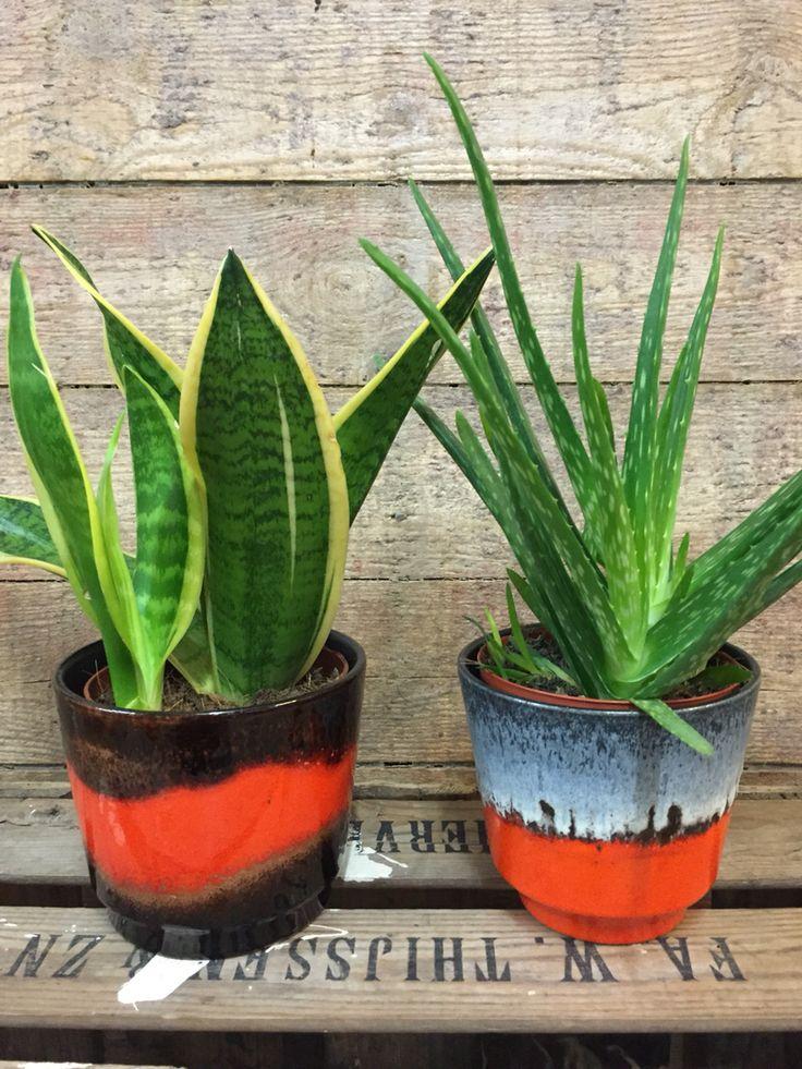 Retro bloempot Scheurich bloempot Vintage planter