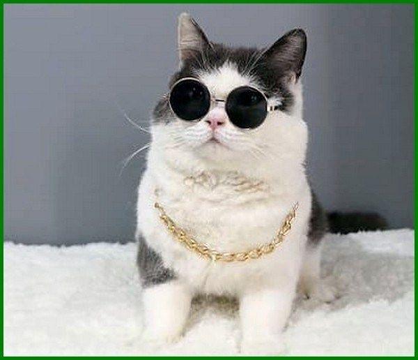 Nama Korea Untuk Kucing Betina Dan Artinya Daftarhewan Com Di 2020 Kucing Betina Hewan Peliharaan Hewan