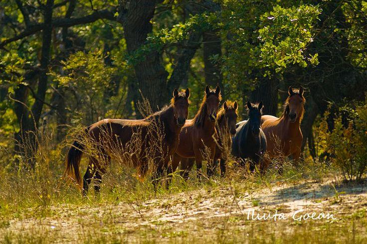 The Danube Delta wild horses. More reasons to visit Romania here: https://www.facebook.com/YouShouldVisitRomania