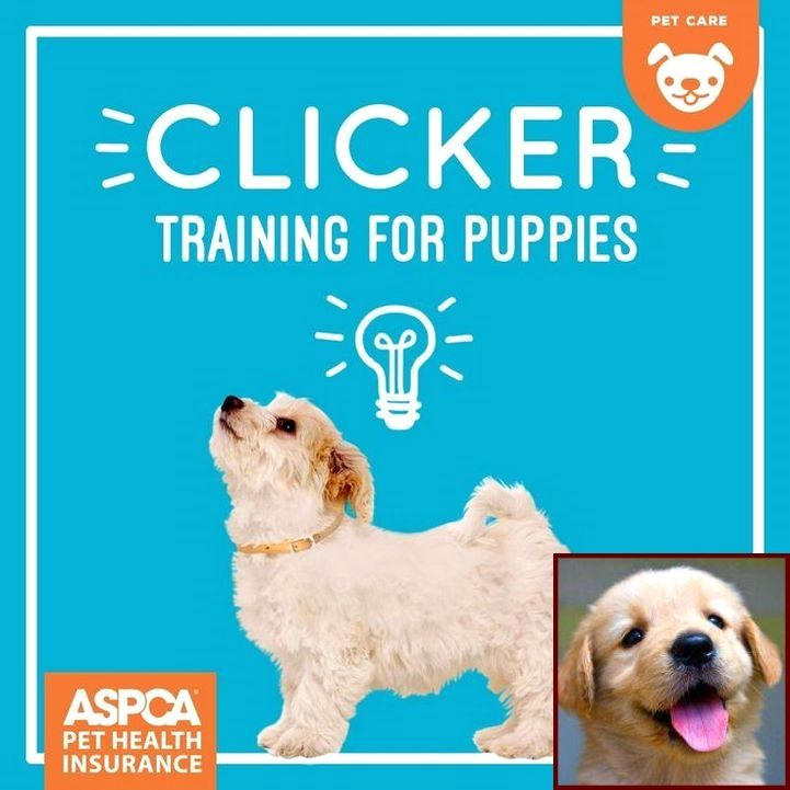 House Training A Puppy For Dummies And Clicker Training Dog Fear