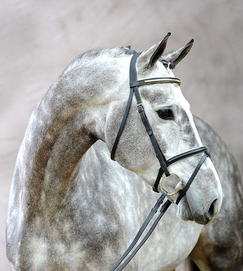 Dapples (A good horse is never a bad color...but dappled grays have always been the ones I swoon the most over.)