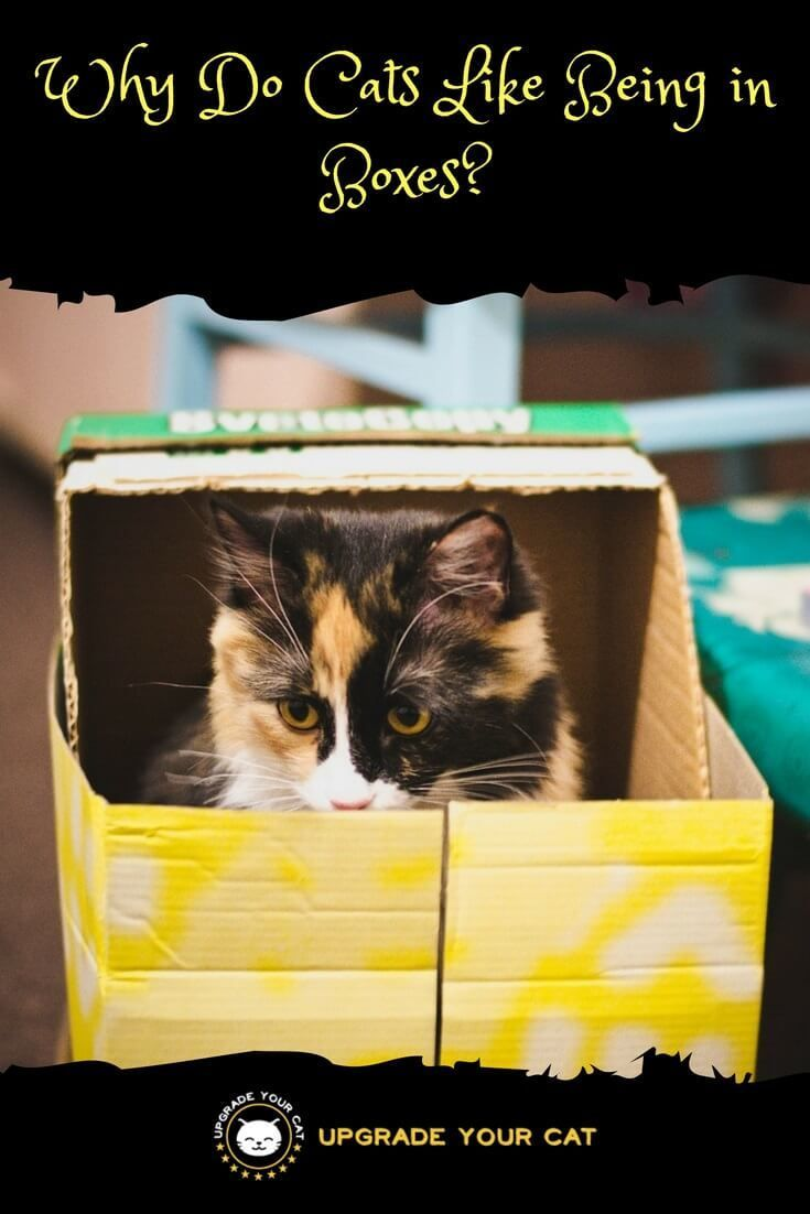 Why Do Cats Like Being In Boxes Cat Behavior Cat Care Cats
