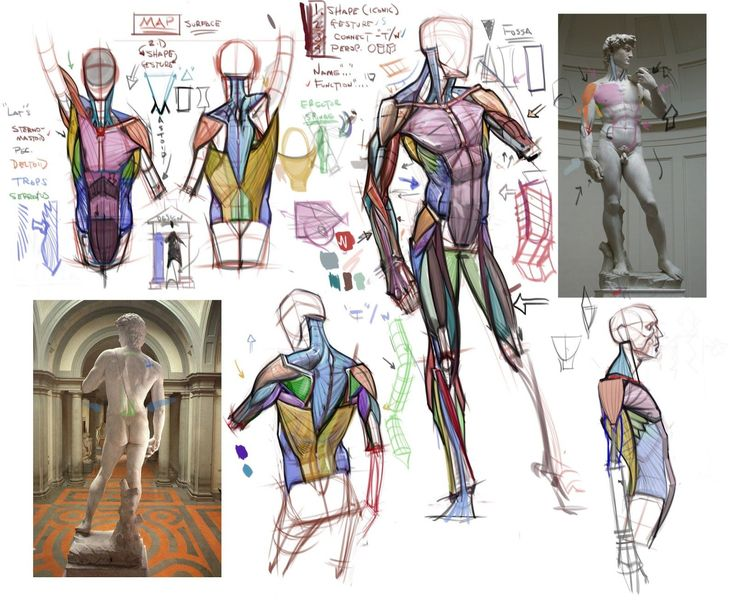 Image result for basic artistic anatomy lecture