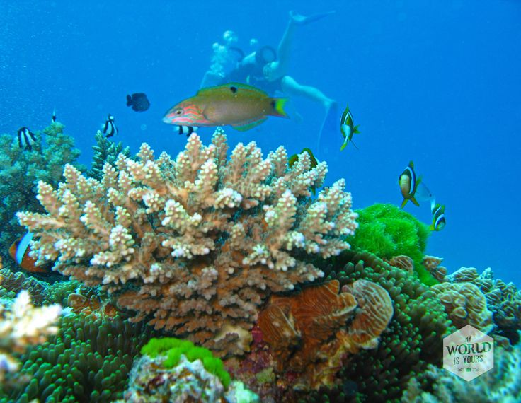 Different kind of fish and coral in the Great Barrier Reef, Unesco World Heritage, Australia. #diving #scuba #dive