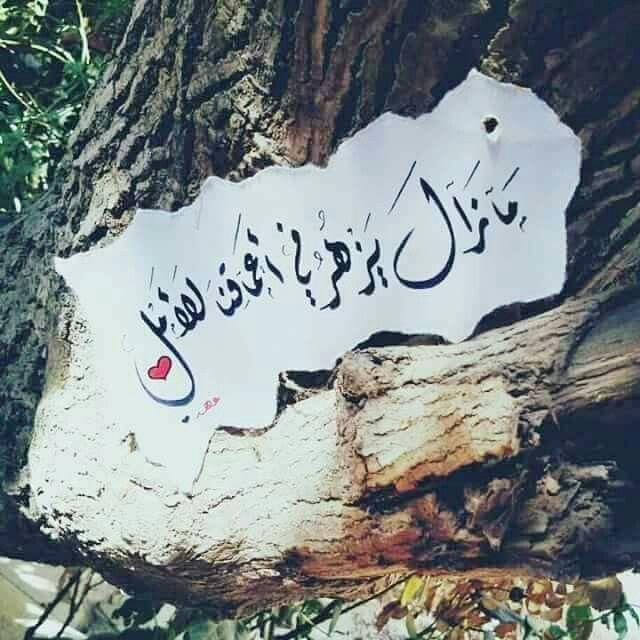 مازال يزهر في اعماقنا الأمل امل في رب السموات والارض الذي اذا قال للشئ كن فيكون Queen Quotes Arabic Quotes Photo Quotes