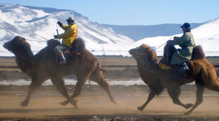 Camel Festival Mongolië Reistip - GlobeHopper