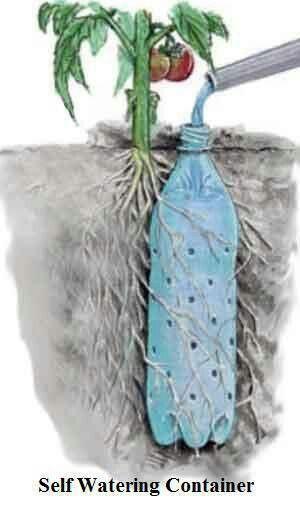 Verwenden Sie eine alte Flasche für einen selbstbewässernden Behälter Reduzieren. Wiederverwendung. Recyceln #behalter #einen #flasche #reduzieren #selbstbewassernden #verwenden #wiederverwendung