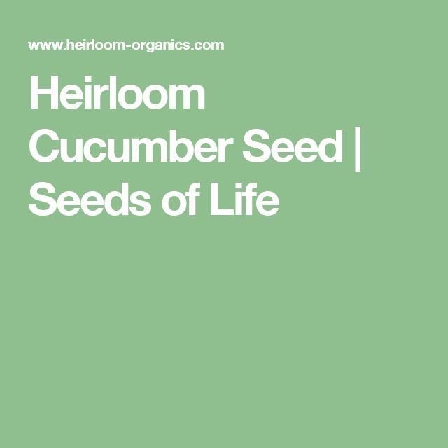 Heirloom Cucumber Seed | Seeds of Life