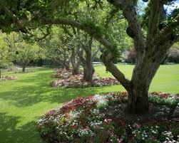 planting under trees google search - Garden Ideas Under Trees