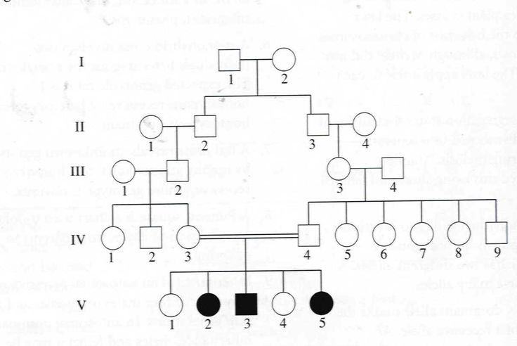 genetic family tree template - Google Search