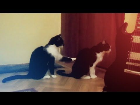 A Heart-Felt Apology From One Cat to Another! I laughed sooo hard!!!