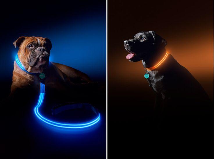 Squeaker Poochlight Illuminating LED Dog Collars and Leashes