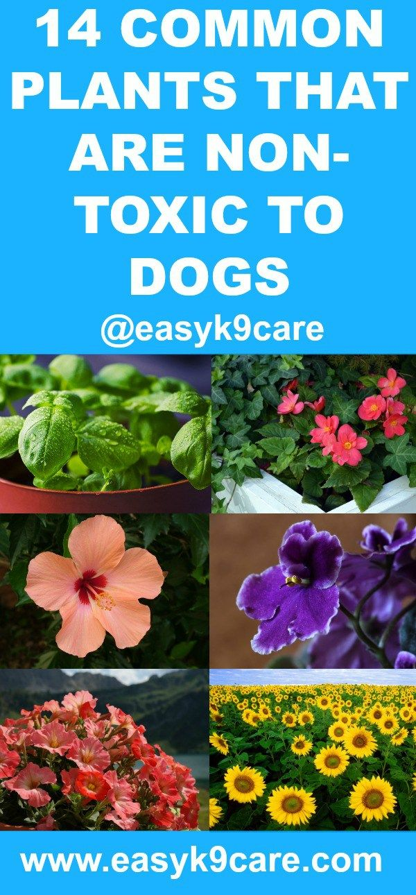 1084 best dog care tips images on pinterest for Large non toxic house plants