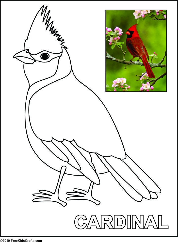 bird coloring sheet | Bird coloring pages, Bird drawings, Simple ... | 984x723