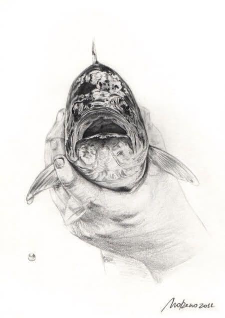 ilustração homem com cabeça de peixe - Pesquisa Google