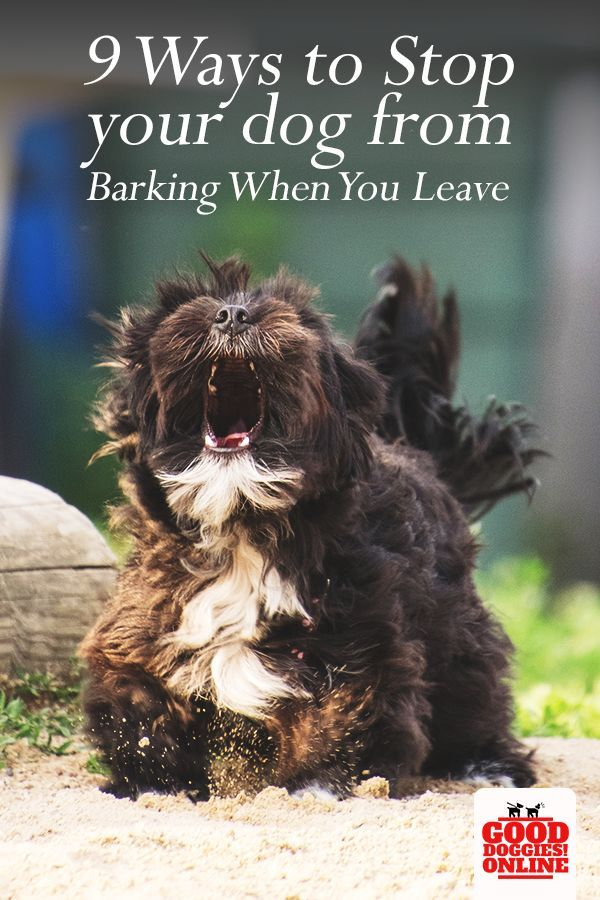 Does Your Dog Bark Too Much Check Out These Training Tips On How To Stop Barking When You Leave The House Dogs Dogtraining