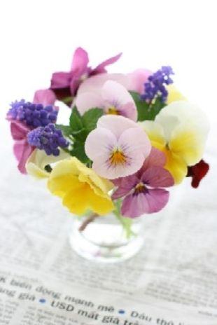 パンジーを摘んできました。今が盛りと、たくさんの花びらを所狭しと並べて咲いています。ピンク系・紫系・黄色系、そしてムスカリと一緒に小さな花束ができました。