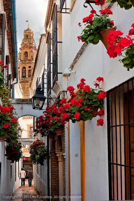 Paseando por la Calleja de Las Flores (Walking on the Flowers Street),  Cordoba. Spain. Explored. 2013-03-01