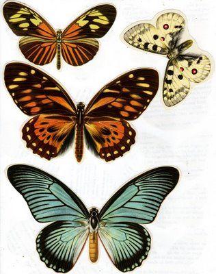 The Vintage Moth..: butterflies