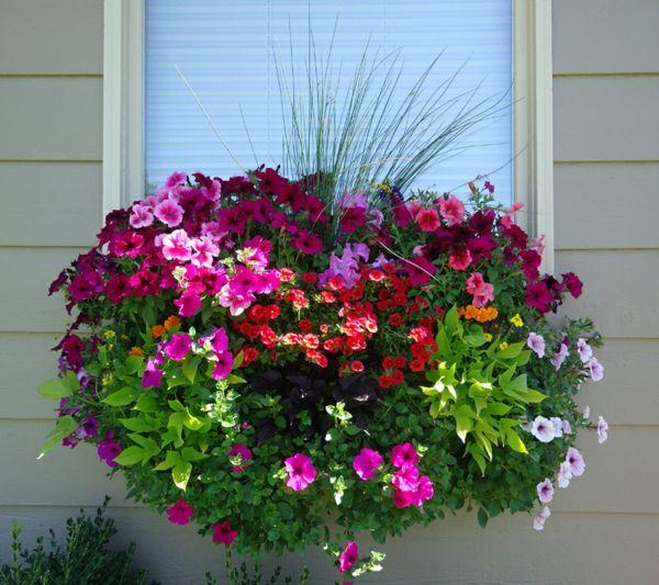 Blumenkasten Fur Balkon Wunderbare Blumen Pflanzideen
