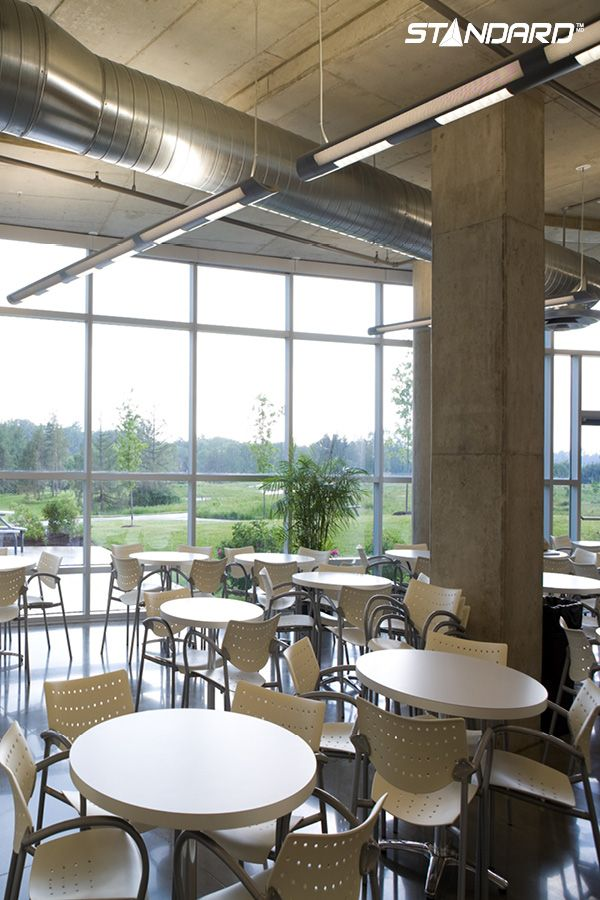 LED T8 Lamps Pair Perfectly With Natural Light In A Cafeteria; Theyu0027re The