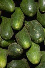 Grön slanggurka | Odla.nu